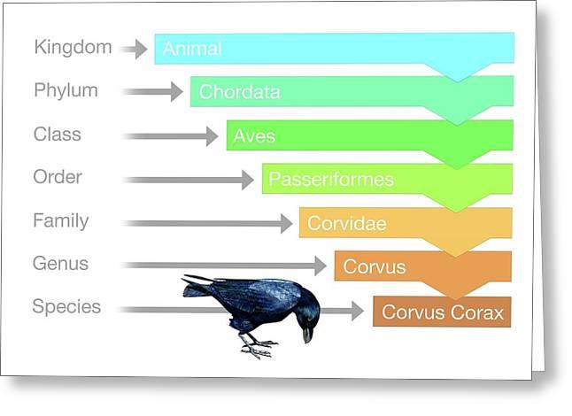 Biological Classification Greeting Card by Mikkel Juul Jensen