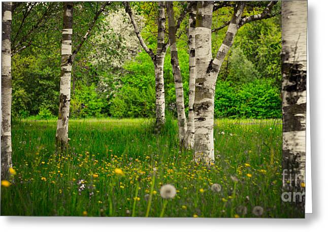 Hannes Cmarits Greeting Cards - Birches Greeting Card by Hannes Cmarits