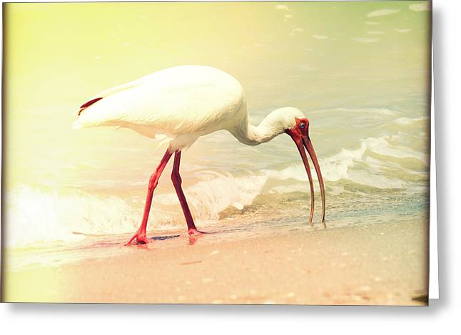Retro Bird Greeting Cards - Bird Breakfast Greeting Card by Chris Andruskiewicz