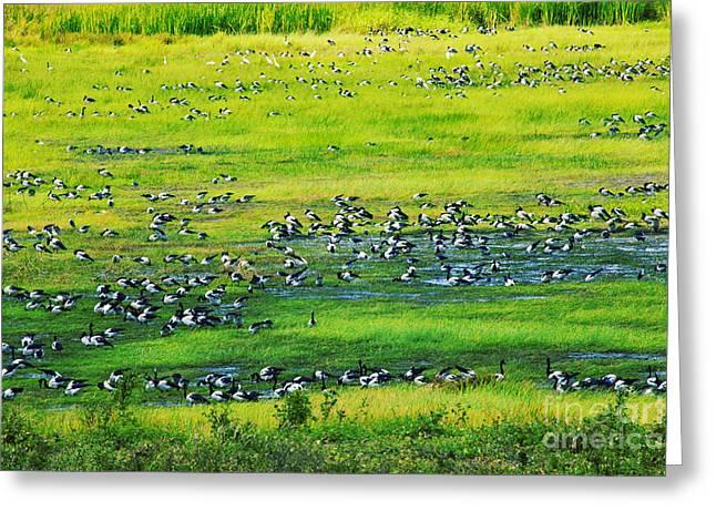 Geese Greeting Cards - Bird Migration Greeting Card by Douglas Barnard