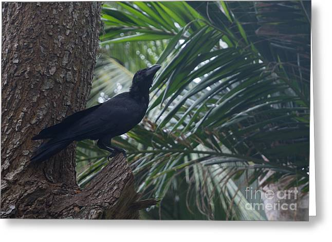 Southern Province Greeting Cards - Black raven Greeting Card by Christina Rahm
