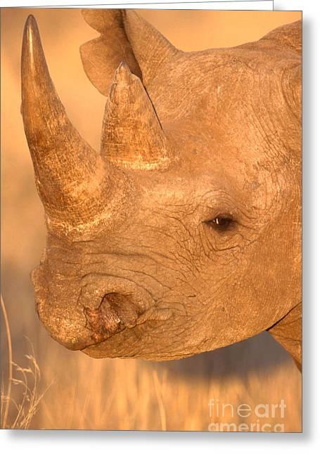 Rhinocerotidae Greeting Cards - Black Rhinoceros Greeting Card by Art Wolfe