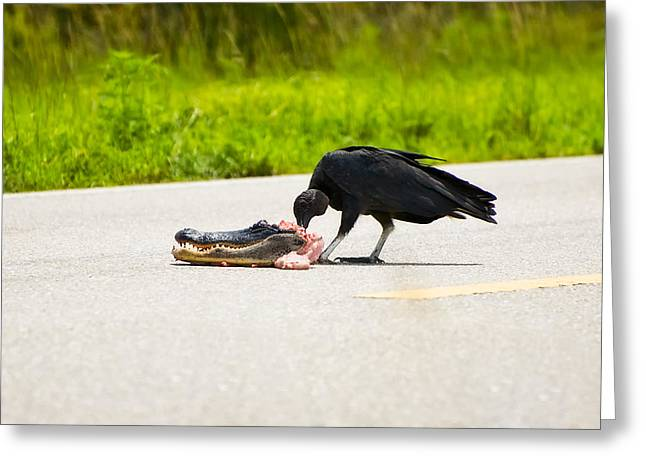 American Food Greeting Cards - Black Vulture Greeting Card by Rich Leighton
