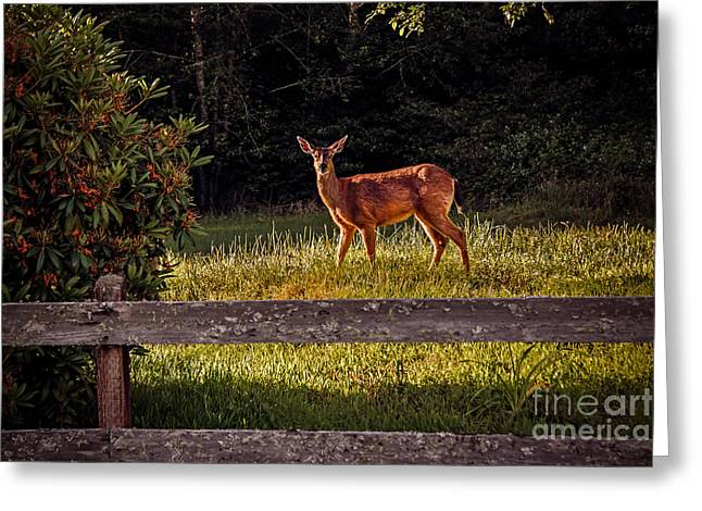 North Fork Greeting Cards - Blacktail Doe Greeting Card by Robert Bales