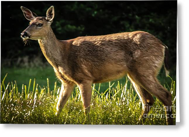 North Fork Greeting Cards - Blacktail Greeting Card by Robert Bales