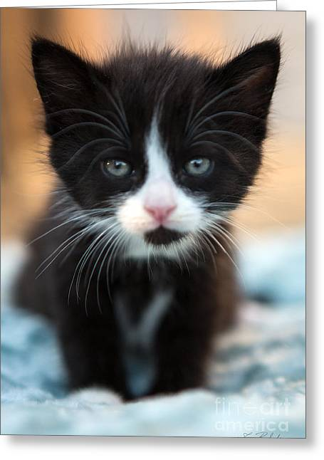 Cat Art Greeting Cards - Blake and white Kitten Greeting Card by Iris Richardson