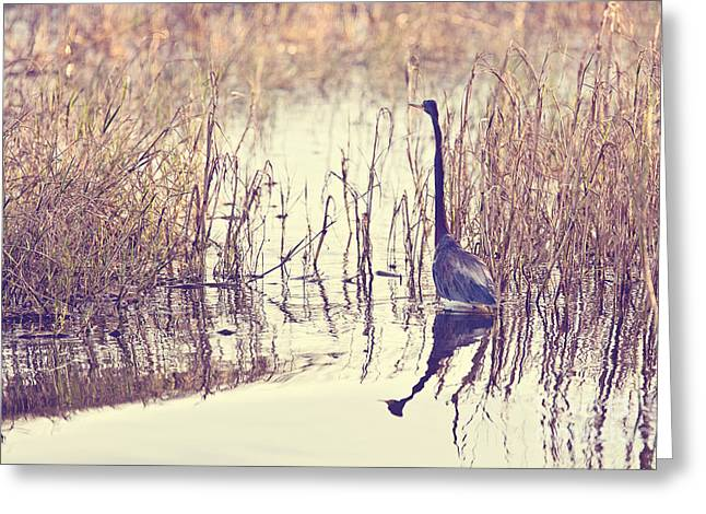 Tricolored Heron Greeting Cards - Blending In Greeting Card by Scott Pellegrin