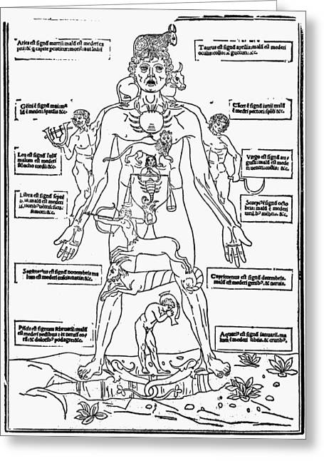 1493 Greeting Cards - Bloodletting Chart, 1493 Greeting Card by Granger