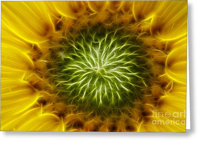 Carpels Greeting Cards - Bloom Of The Sunflower Greeting Card by Michal Boubin
