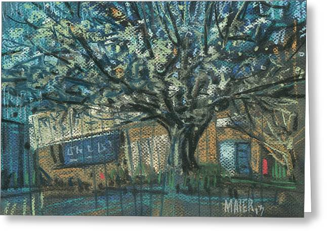 Pear Tree Greeting Cards - Blooming Bradford Greeting Card by Donald Maier