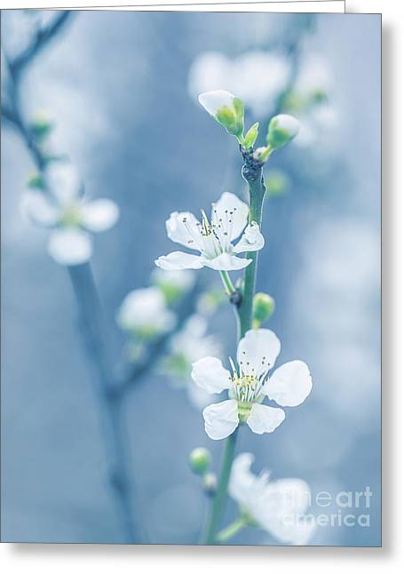 Fruit Tree Art Greeting Cards - Blooming tree at spring Greeting Card by Anna Omelchenko