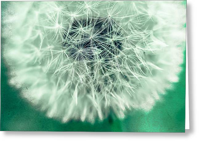 Hannes Cmarits Greeting Cards - Blowball 1x1 Greeting Card by Hannes Cmarits