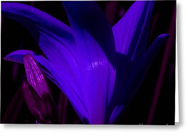Day Lilly Greeting Cards - Blue Display Greeting Card by John Le Brasseur
