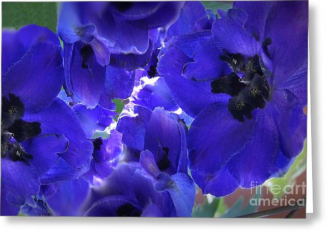 Floral Photographs Mixed Media Greeting Cards - Blue Dreams Greeting Card by Beverly Guilliams