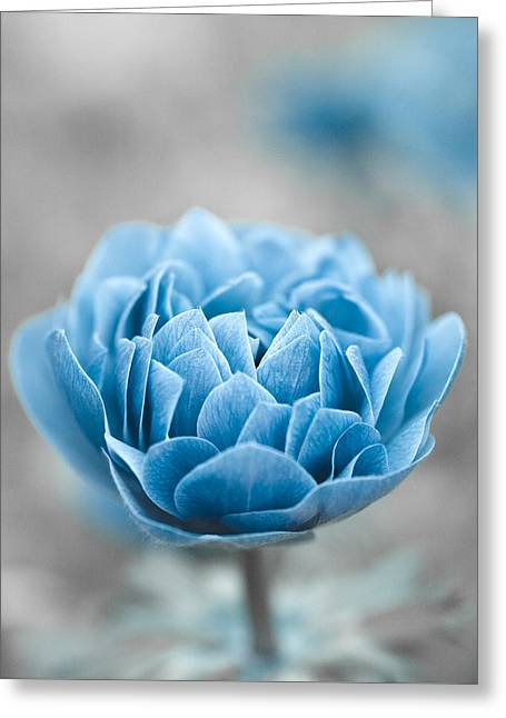 Deep Blue Greeting Cards - Blue Flower Greeting Card by Frank Tschakert