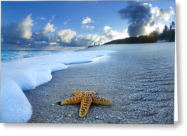 On The Beach Greeting Cards - Blue Foam starfish Greeting Card by Sean Davey