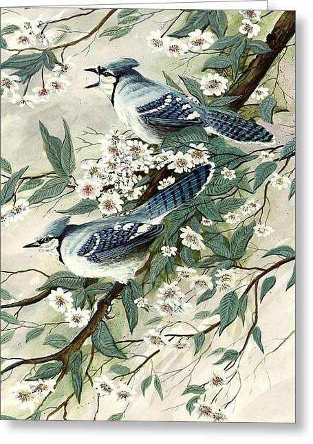 Blue Jays And Blossoms Greeting Card by Steven Schultz