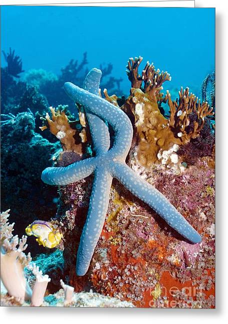 Star Fish Greeting Cards - Blue Starfish Greeting Card by Georgette Douwma
