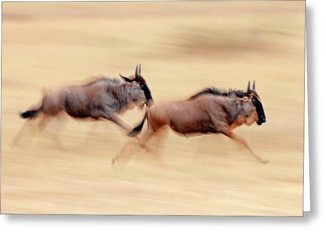 Blue Wildebeest Greeting Card by Bildagentur-online/mcphoto-schulz