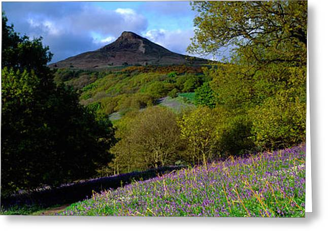 Hilltop Scenes Greeting Cards - Bluebell Flowers In A Field, Cleveland Greeting Card by Panoramic Images