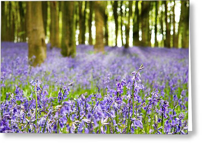 Carpet Photographs Greeting Cards - Bluebell wood Greeting Card by Jane Rix