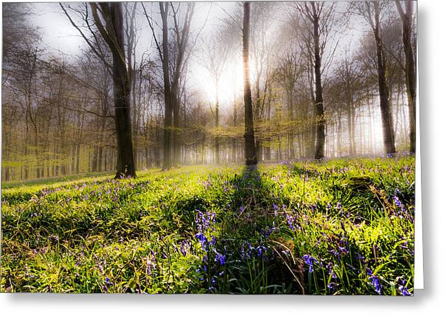 Bluebells Greeting Cards - Bluebell woodland Greeting Card by Ian Hufton