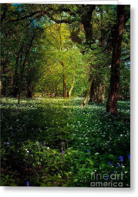 Northamptonshire Greeting Cards - Bluebells and Wood Anemones Greeting Card by ShabbyChic fine art Photography