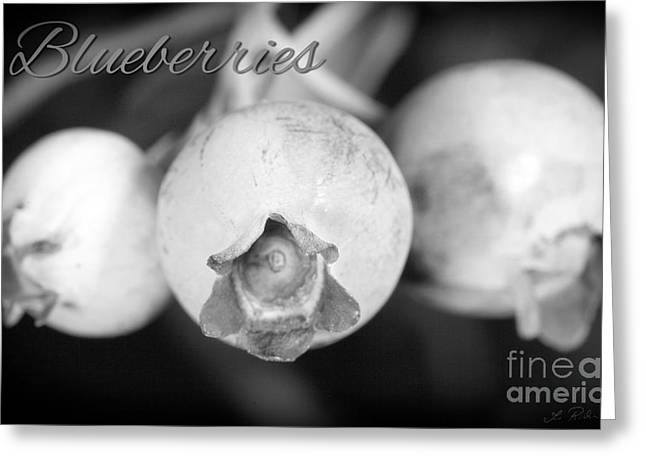 Frucht Greeting Cards - Blueberries on Bush Trio Greeting Card by Iris Richardson