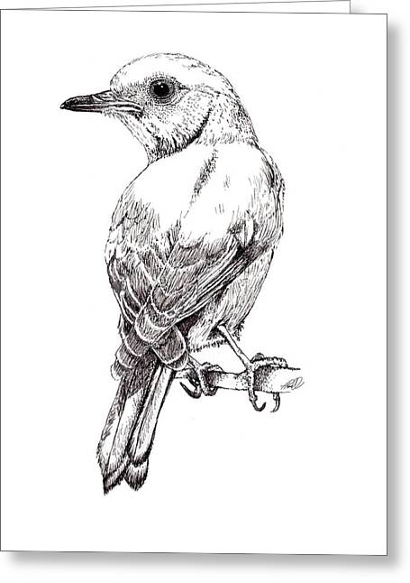 Pen And Ink Drawing Photographs Greeting Cards - Bluebird Greeting Card by Tanya Hamell