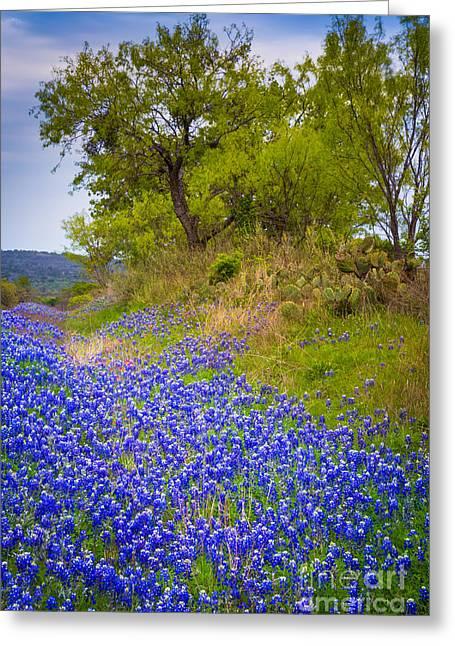 Bluebonnet Scene Greeting Cards - Bluebonnet Meadow Greeting Card by Inge Johnsson