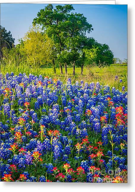 Pasture Scenes Greeting Cards - Bluebonnet Pasture Greeting Card by Inge Johnsson