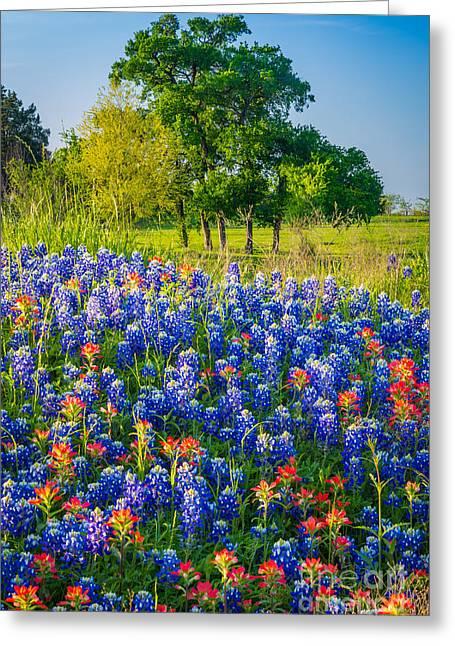 Indian Paintbrush Greeting Cards - Bluebonnet Pasture Greeting Card by Inge Johnsson