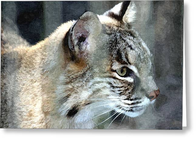 Bobcat Mixed Media Greeting Cards - Bobcat Greeting Card by Barry Spears