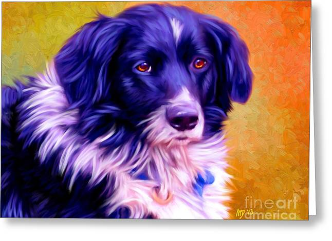 Collie Pics Greeting Cards - Border Collie Greeting Card by Iain McDonald