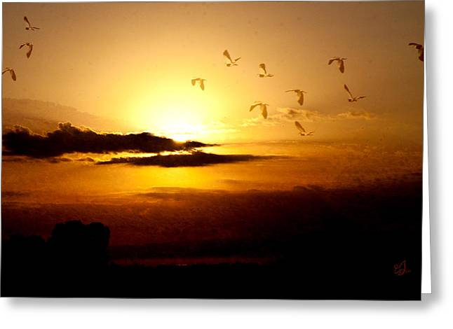 Flying Seagull Greeting Cards - Born Free Greeting Card by Music of the Heart