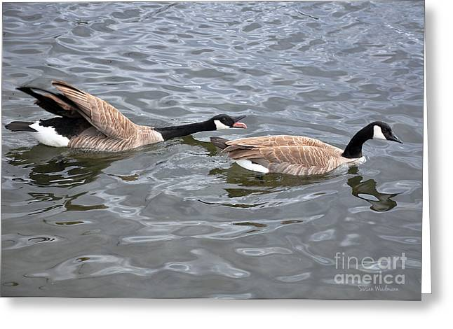 Susan Wiedmann Greeting Cards - Bossy Canada Goose Greeting Card by Susan Wiedmann