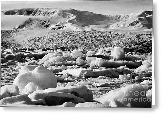 Merging Greeting Cards - brash sea pack ice forming together as winter approaches cierva cove Antarctica Greeting Card by Joe Fox
