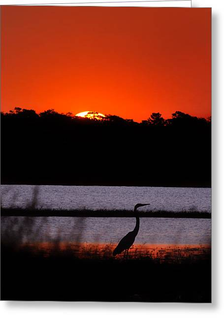 Sillouette Greeting Cards - Break of Day Greeting Card by Adele Moscaritolo
