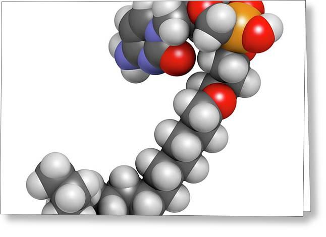 Brincidofovir Antiviral Drug Molecule Greeting Card by Molekuul