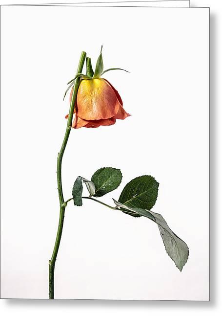 Ephemeral Greeting Cards - Broken Greeting Card by Joana Kruse