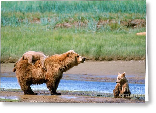 Mother And Young Greeting Cards - Brown Bear Cubs Greeting Card by Mark Newman