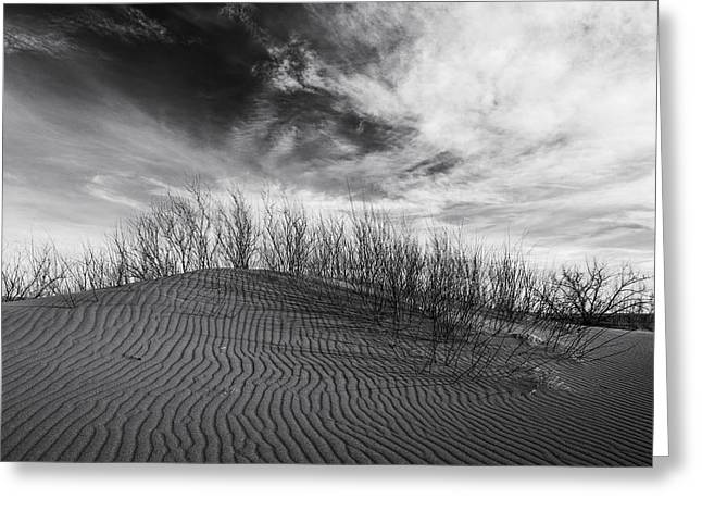 Sand Pattern Greeting Cards - Bruneau Dunes State Park Idaho Greeting Card by Vishwanath Bhat