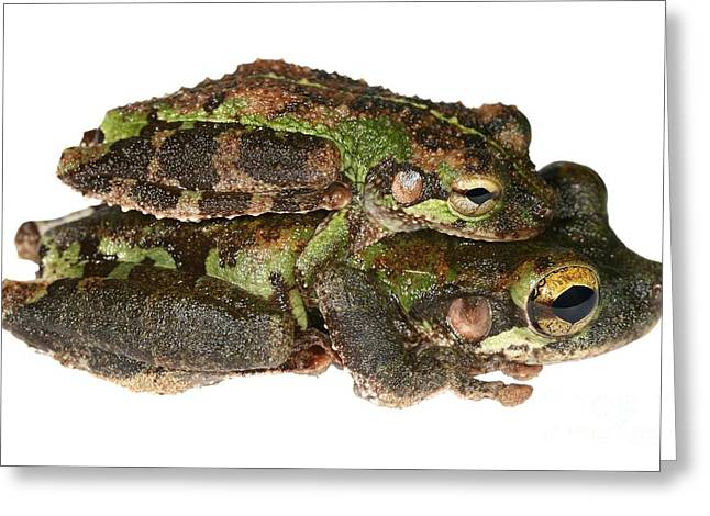 Rep Greeting Cards - Buckley Bonehead Frogs Mating Greeting Card by Dr. Morley Read