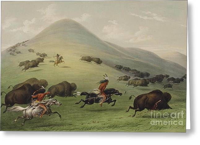 Steer Greeting Cards - Buffalo hunt Greeting Card by George Catlin