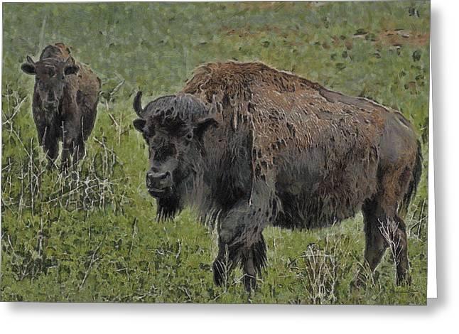 Buffalo Greeting Cards - Buffalo Painterly Greeting Card by Ernie Echols