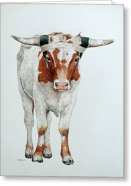 Steer Drawings Greeting Cards - Bull Greeting Card by Kathleen English-Barrett