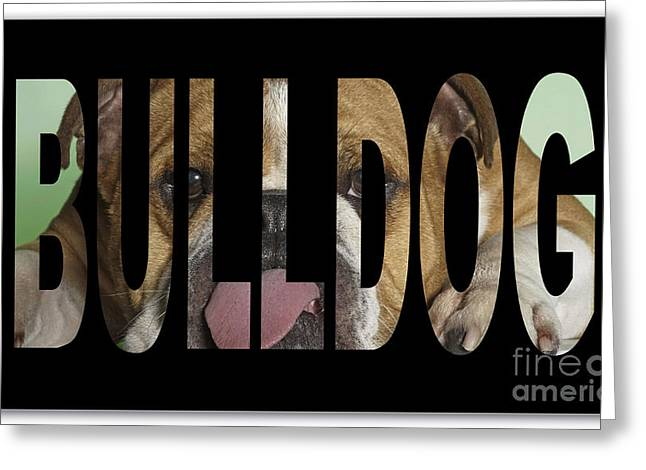 Dog Greeting Cards - Bulldog Greeting Card by Marvin Blaine