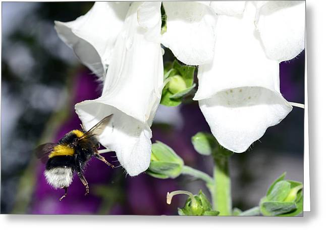 Bumblebee Macro Greeting Card by Toppart Sweden
