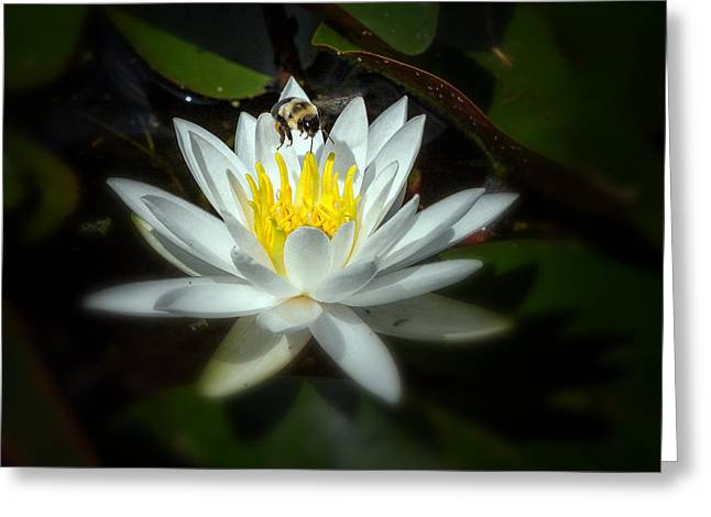 Water Lilly Greeting Cards - Busy Bee Greeting Card by Bill  Wakeley