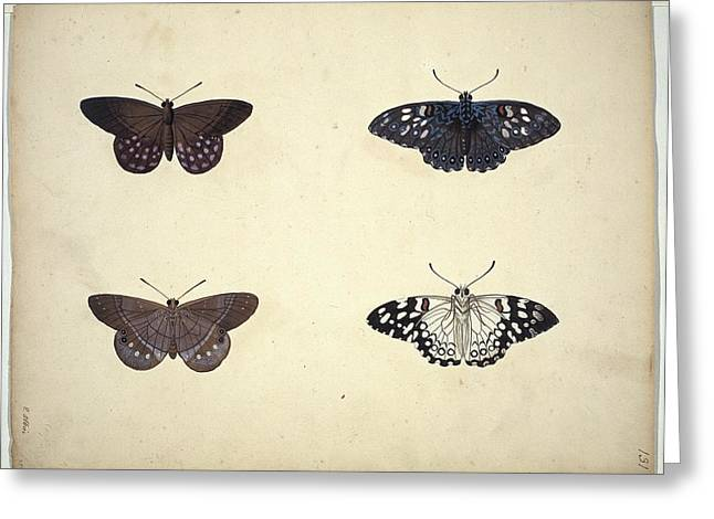 1700s Greeting Cards - Butterflies, 18th century artwork Greeting Card by Science Photo Library